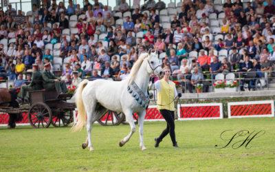 Arabische Pferde zum Jubiläum